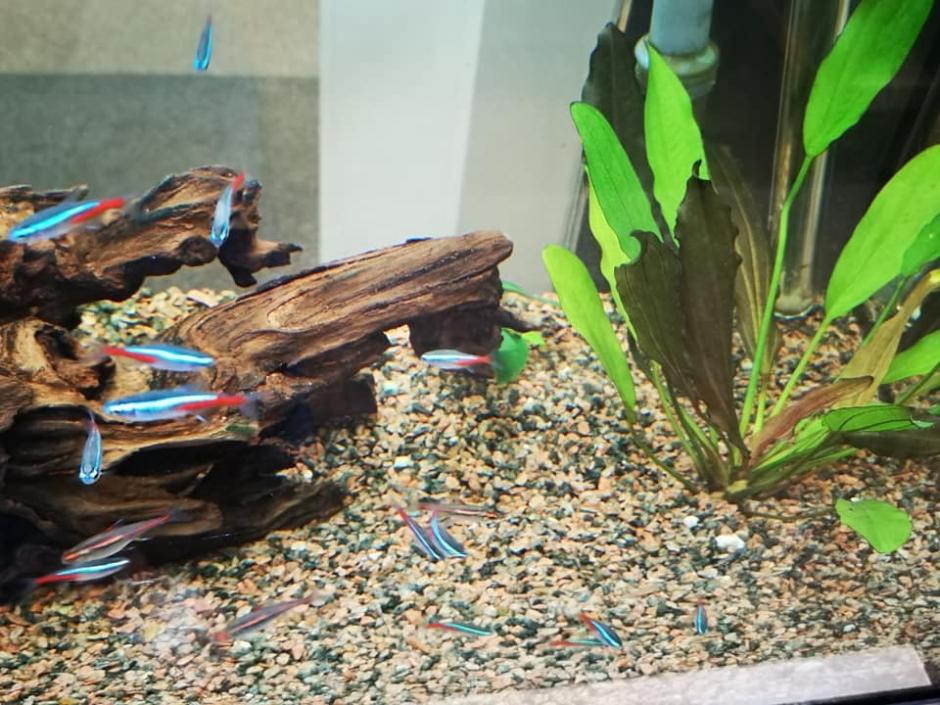 Ribice V Akvariju 2 940x705
